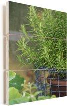 Rozemarijn in een pot Vurenhout met planken 60x90 cm - Foto print op Hout (Wanddecoratie)