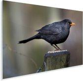 Merel zittend op een houten paaltje Plexiglas 90x60 cm - Foto print op Glas (Plexiglas wanddecoratie)