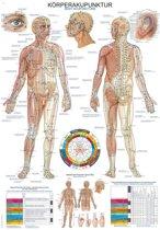 Het menselijk lichaam - anatomie poster acupunctuur en meridianen (Duits/Engels/Latijn, kunststof-folie, 70x100 cm)