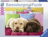 Ravensburger Knus He? Puppies
