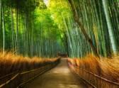 Bamboo - Fotobehang - 232 cm x 315 cm - Multi
