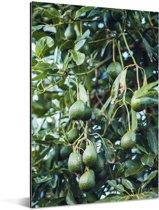 Avocado's aan de boom Aluminium 120x180 cm - Foto print op Aluminium (metaal wanddecoratie) XXL / Groot formaat!