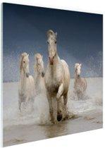 Witte paarden in het water Glas 120x80 cm - Foto print op Glas (Plexiglas wanddecoratie)