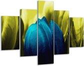 Glasschilderij Tulp | Blauw, Zwart, Groen | 100x70cm 5Luik | Foto print op Glas |  F003746