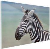 Zebra portret  Glas 60x40 cm - Foto print op Glas (Plexiglas wanddecoratie)