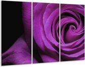 Glasschilderij Roos | Paars, Zwart | 120x80cm 3Luik | Foto print op Glas |  F000391