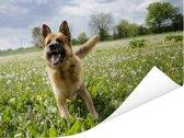 Duitse Herder tussen de bloemetjes Poster 80x60 cm - Foto print op Poster (wanddecoratie woonkamer / slaapkamer) / Huisdieren Poster