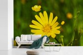 Fotobehang vinyl - Een gele morgenster breedte 360 cm x hoogte 240 cm - Foto print op behang (in 7 formaten beschikbaar)