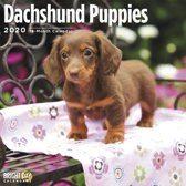 Teckel Puppies Kalender 2020