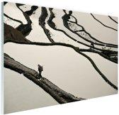Chinese rijstvelden zwart-wit Glas 90x60 cm - Foto print op Glas (Plexiglas wanddecoratie)