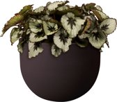 Elho Allure Soft 40 - Bloempot - Bark Brown - Binnen & Buiten  - Ø 39 x H 28.9 cm