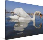 Weerspiegeling van de kleine zwaan in het water Canvas 140x90 cm - Foto print op Canvas schilderij (Wanddecoratie woonkamer / slaapkamer)
