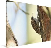 Taigaboomkruiper opzoek naar voedsel Canvas 90x60 cm - Foto print op Canvas schilderij (Wanddecoratie woonkamer / slaapkamer)