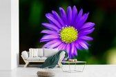 Fotobehang vinyl - Close-up foto van een aster bloem breedte 450 cm x hoogte 300 cm - Foto print op behang (in 7 formaten beschikbaar)
