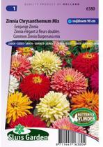Sluis Garden - Zinnia Chrysanthemum Mix