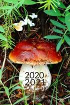 Wild Fairy Fungi Mushroom Hunter's 25 Month Weekly Planner Dated Calendar for Women & Men: 2 years plus December To-Do Lists, Tasks, Notes or Appointm