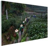 Chinese theeplukkers Glas 120x80 cm - Foto print op Glas (Plexiglas wanddecoratie)