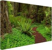 FotoCadeau.nl - Donkerbruin pad  door het bos Canvas 60x40 cm - Foto print op Canvas schilderij (Wanddecoratie)