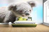 Een close-up van een koala Fotobehang 380x265