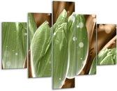 Glasschilderij Tulp | Groen, Bruin | 100x70cm 5Luik | Foto print op Glas |  F005031
