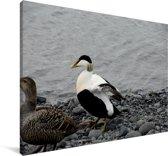 Twee eidereendjes aan de rand van het water Canvas 140x90 cm - Foto print op Canvas schilderij (Wanddecoratie woonkamer / slaapkamer)