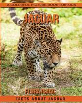 Facts about Jaguar a Colorful Picture Book for Kids