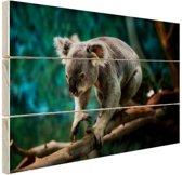 Klimmende koala op tak Hout 120x80 cm - Foto print op Hout (Wanddecoratie)