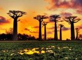 Papermoon Baobabs Trees African Sunset Vlies Fotobehang 200x149cm 4-Banen
