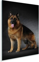 Portret van een Duitse Herder met zwarte achtergrond Plexiglas 120x180 cm - Foto print op Glas (Plexiglas wanddecoratie) XXL / Groot formaat!