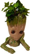 Baby Groot Planten Bakje Met Echt Plantje, Guardians Of The Galaxy
