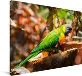 Kleurrijke edelpapegaai op een boomstronk Canvas 30x20 cm - klein - Foto print op Canvas schilderij (Wanddecoratie woonkamer / slaapkamer)