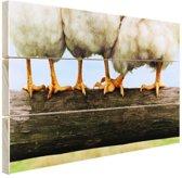 Foto kippenpoten afdruk Hout 120x80 cm - Foto print op Hout (Wanddecoratie)