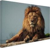 Rustende leeuw op een rotsblok Canvas 80x60 cm - Foto print op Canvas schilderij (Wanddecoratie woonkamer / slaapkamer) / Dieren Canvas Schilderijen