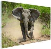 Rennende olifant Glas 60x40 cm - Foto print op Glas (Plexiglas wanddecoratie)