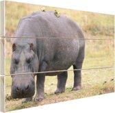 Nijlpaard op het droge Hout 160x120 cm - Foto print op Hout (Wanddecoratie) XXL / Groot formaat!