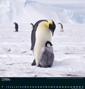 Wildlife 45x48 National Geographic Kalender 2020