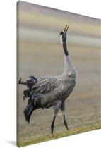 Europese kraanvogel kijkt omhoog in de lucht Canvas 60x90 cm - Foto print op Canvas schilderij (Wanddecoratie woonkamer / slaapkamer)