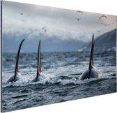 Drie orkas Aluminium 60x40 cm - Foto print op Aluminium (metaal wanddecoratie)
