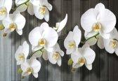 Fotobehang Flowers    XXXL - 416cm x 254cm   130g/m2 Vlies