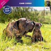 Cane Corso Kalender 2020