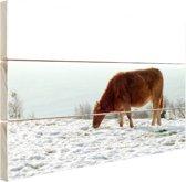 Bruine koe op zoek naar eten Hout 60x40 cm - Foto print op Hout (Wanddecoratie)