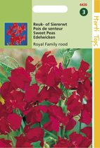 Hortitops Zaden - Lathyrus Odor. Royal Family Rood