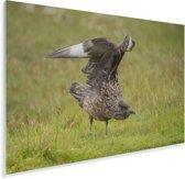 Een grote jager is klaar om op te gaan stijgen Plexiglas 90x60 cm - Foto print op Glas (Plexiglas wanddecoratie)