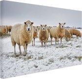 Schapen in een winterlandschap Canvas 80x60 cm - Foto print op Canvas schilderij (Wanddecoratie woonkamer / slaapkamer) / Dieren Canvas Schilderij