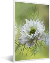 Foto in lijst - Een close-up van de nigelle fotolijst wit 40x60 cm - Poster in lijst (Wanddecoratie woonkamer / slaapkamer)