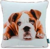 Intimo Bulldog - Sierkussen - 45x45 - Wit/Bruin