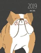 2019 Bull Dog