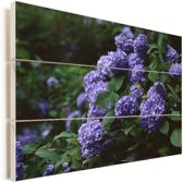 Duisternis om hortensia in een tuin Vurenhout met planken 40x30 cm - klein - Foto print op Hout (Wanddecoratie)