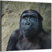 Dibond –Gorilla – 50x50cm Foto op Dibond;Aluminium (Wanddecoratie van metaal)
