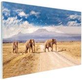 Drie overstekende olifanten Glas 30x20 cm - Foto print op Glas (Plexiglas wanddecoratie)